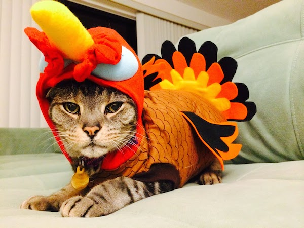 Thanksgiving Turkey-Cat